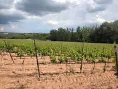 Oller del Mas Cellar's Organic Vineyards